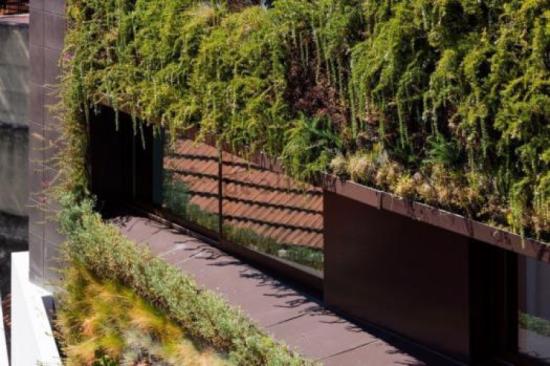 jardim vertical lisboa:escolha das espécies foi feita de forma criteriosa. Para cada