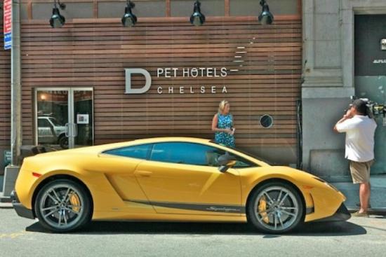 Veículos de Luxo Chelsea Pet Hotel - Laguna