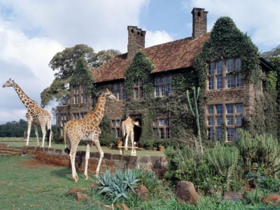 Girafas Hotel Quênia - Laguna