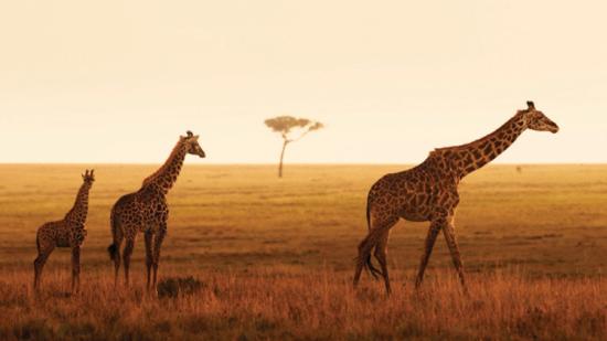 Safari privado Four Seasons Safari Lodge Serengeti - Laguna