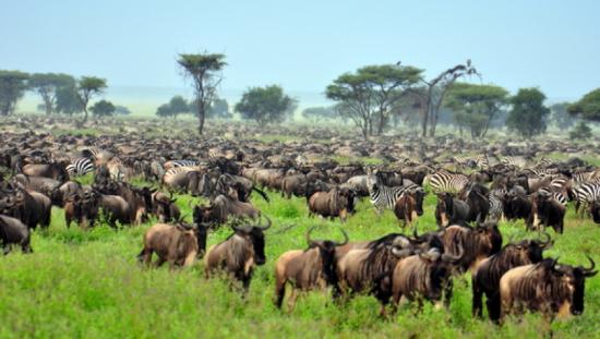 Safari privado Four Seasons Safari Lodge Serengeti Manada - Laguna
