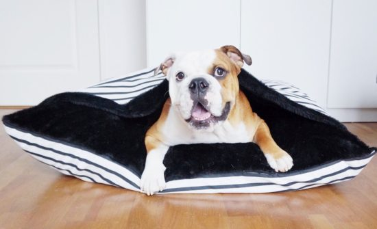 Moof Smart Bed 2 - Laguna