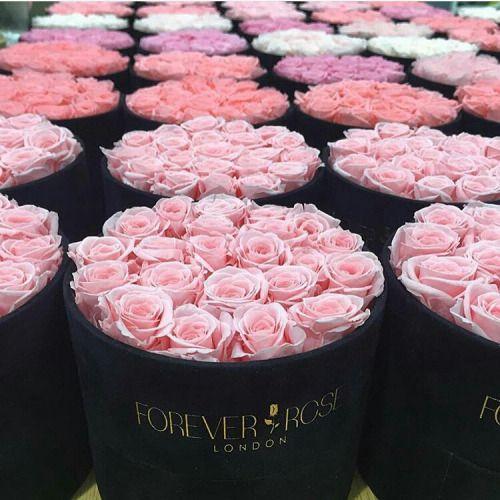 Rosa The Forever Rose London - Laguna