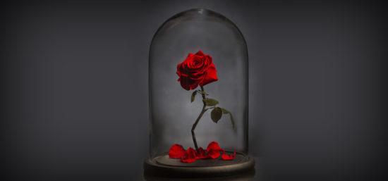 The Forever Rose London inspirada na Bela e a Fera - Laguna