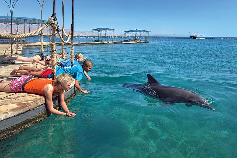 Golfinhos em Eilat - Laguna
