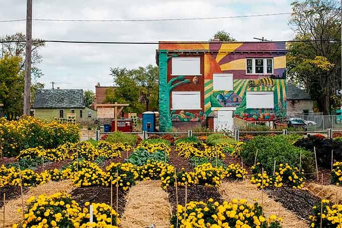 Horta urbana Detroit - Laguna