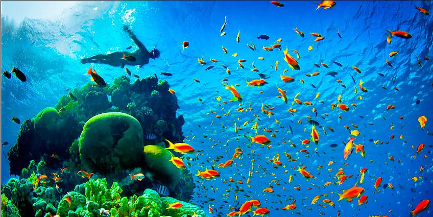 Mergulho em Eilat - Laguna
