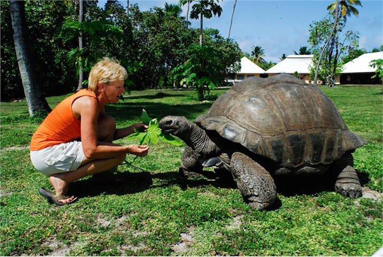 Ilhas Seychelles fauna - Construtora Laguna