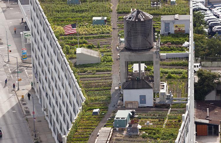 Nova Iorque possui a maior horta urbana do mundo - Construtora Laguna