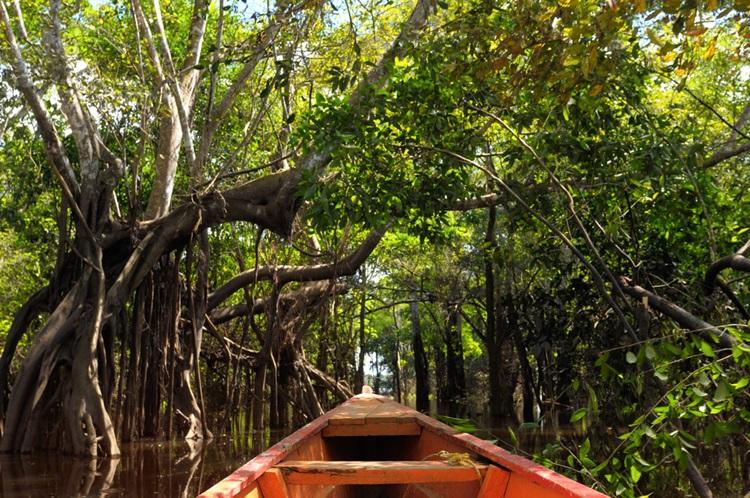 7 lugares para conhecer no mundo Amazonia - Construtora Laguna