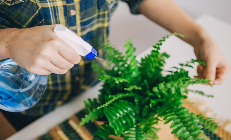 Conheça 4 aplicativos que ajudarão você a cuidar de plantas - Construtora Laguna