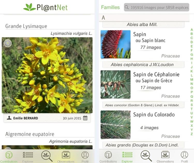 Conheça 4 aplicativos que ajudarão você a cuidar de plantas - Plantnet - Construtora Laguna