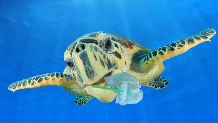 Starbucks quer eliminar canudos de plástico até 2020 - Tartaruga - Construtora Laguna