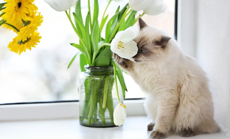Conheça as plantas que são tóxicas para seu pet - Construtora Laguna