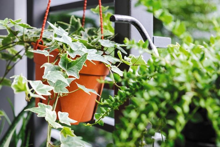 Conheça as plantas que são tóxicas para seu pet - Hera - Construtora Laguna