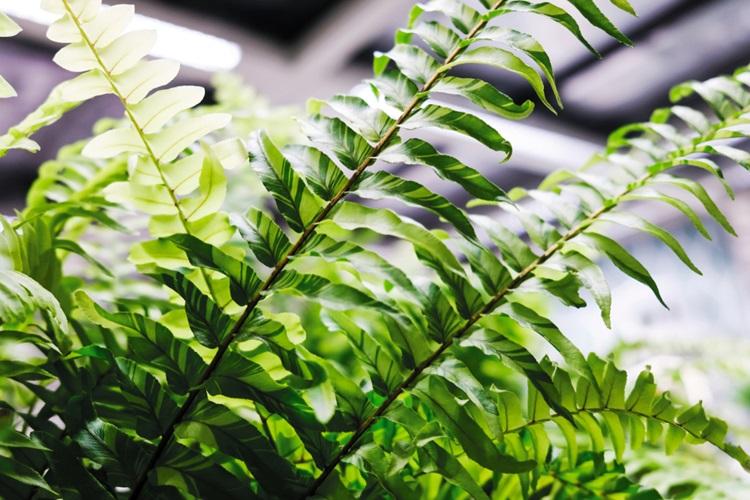 Conheça as plantas que são tóxicas para seu pet - Samambaia - Construtora Laguna