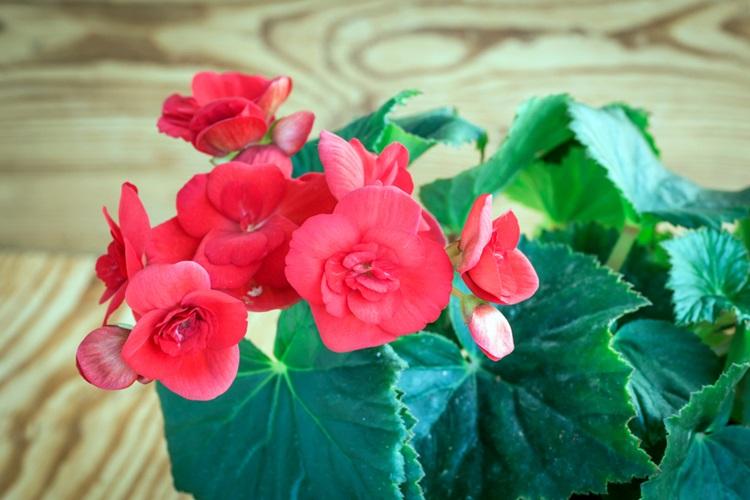Como inserir arranjos de flores e plantas em diferentes cômodos - Construtora Laguna