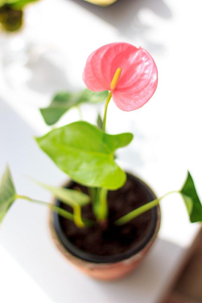 Como inserir arranjos de flores e plantas no diferentes cômodos da casa - Construtora Laguna