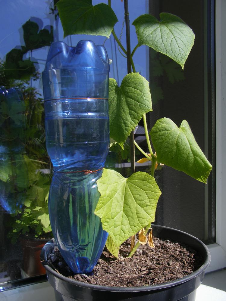 Como manter suas plantas saudáveis nas férias - Construtora Laguna