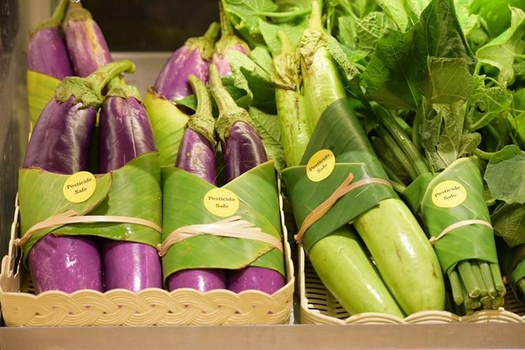 Folhas de bananeira substituem embalagens plásticas - Construtora Laguna