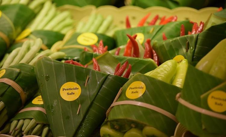 Folhas de bananeira substituem embalagens plásticas na Ásia - Construtora Laguna