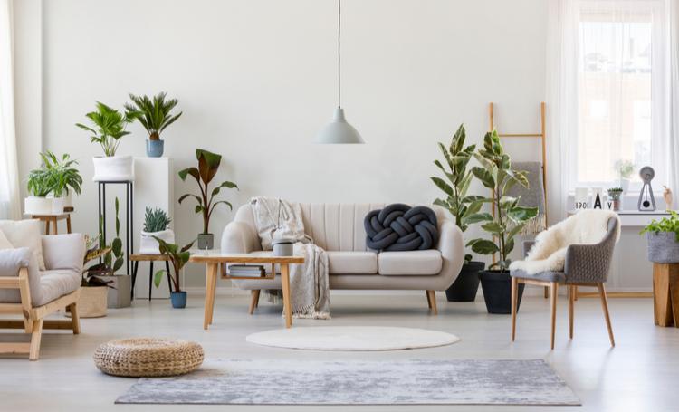 Como utilizar plantas no apartamento - Construtora Laguna