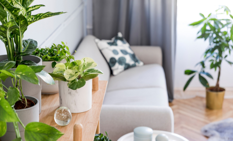 Benefícios de incluir plantas na decoração - Construtora Laguna