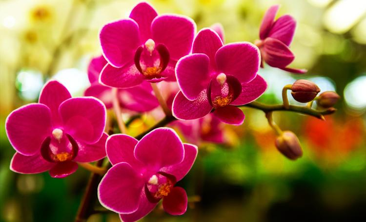 Orquídeas: entenda mais e saiba onde encontrar em Curitiba