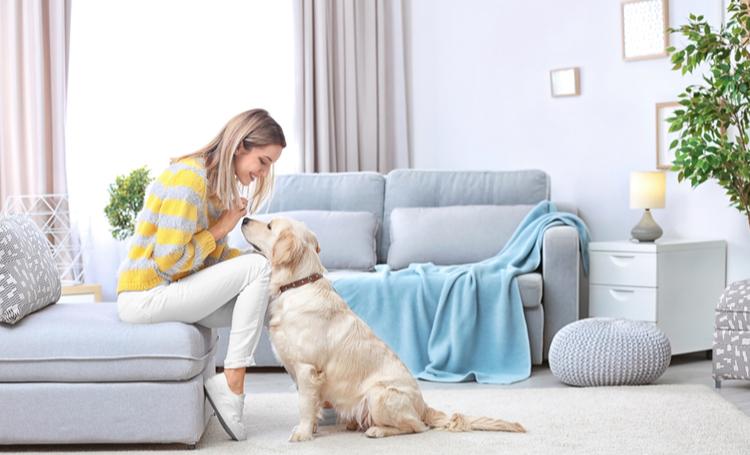 BLOG: (Arquitetura e decoração) Arquitetura e decoração para quem tem pets em casa