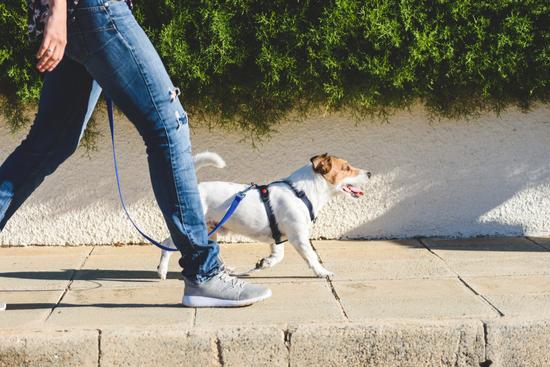 Benefícios de caminhar com seu cão - Construtora Laguna