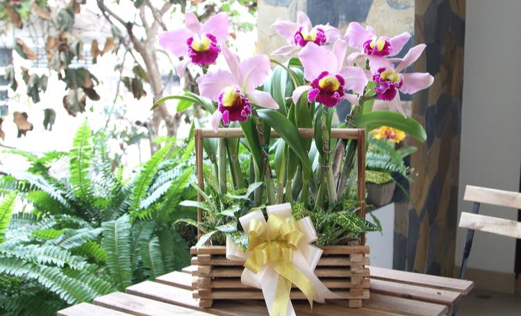 Saiba como cuidar de orquídeas - Construtora Laguna