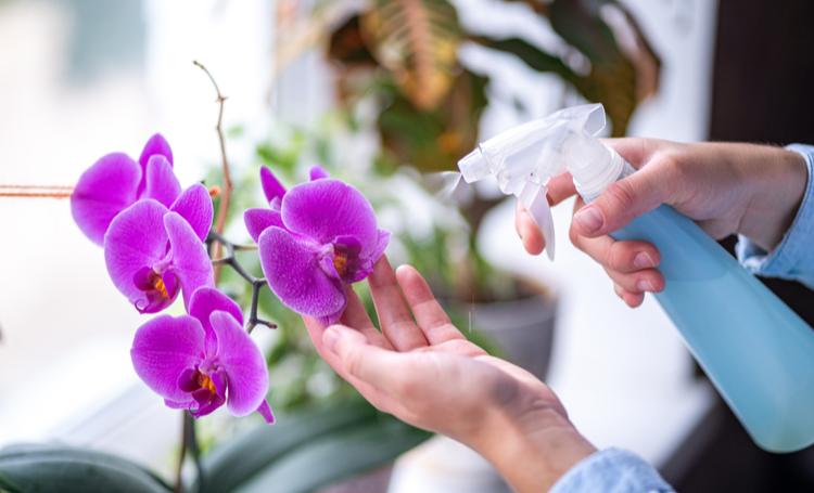 Pessoa cuidando de orquídeas para o cultivo - LAGUNA