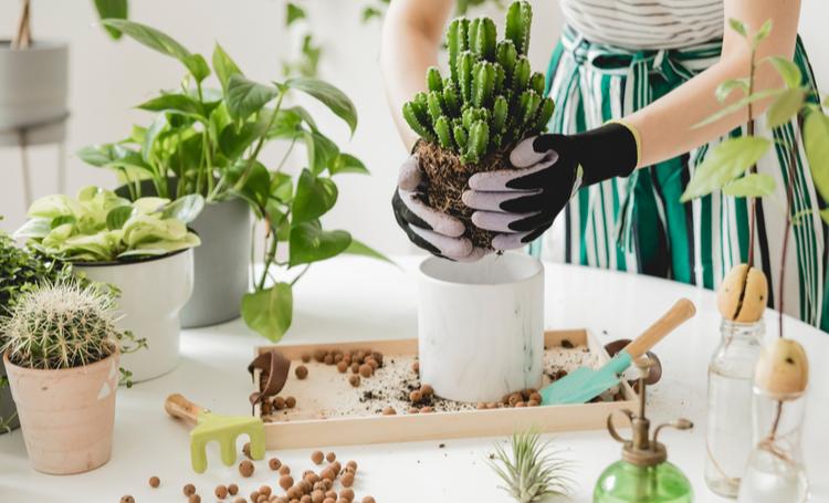 Mulher manuseando ferramentas de plantas para iniciantes – LAGUNA