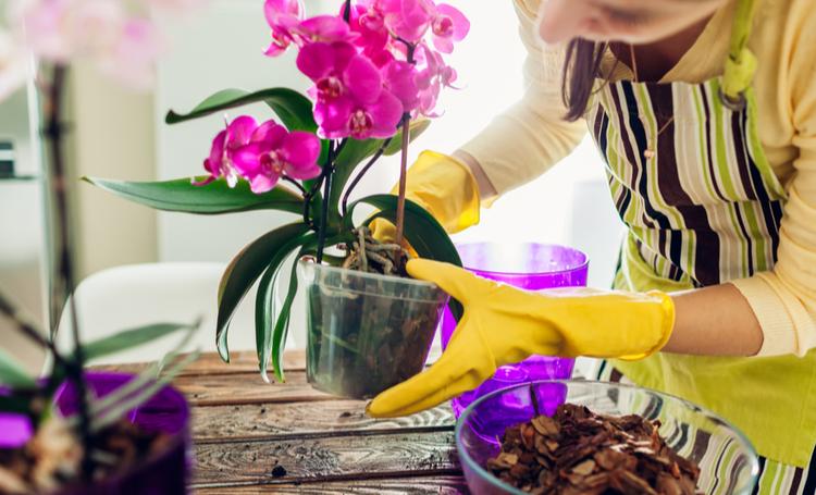 Mulher cultivando orquídeas – LAGUNA