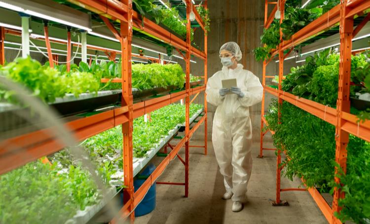 Foodtechs no mercado alimentício